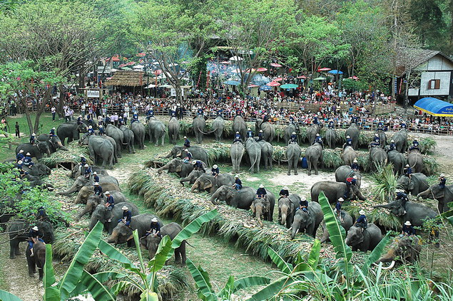 Elephants join a grand feast in Chiang Mai province to mark National Thai Elephant Day, on Sunday 13. Photo by Chewin Sattha
