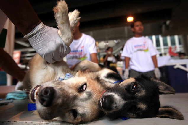 A couple of dogs receive treatment as part of the Office of Veterinary Public Health's