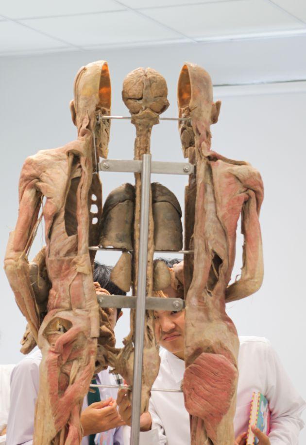 Museum Of Human Body In Health Disease Bangkok Post Learning
