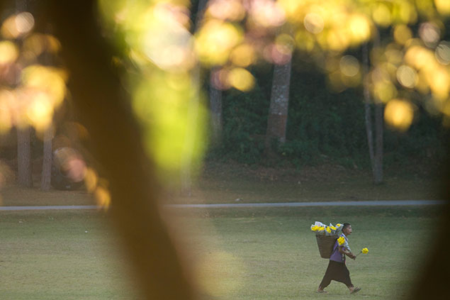 A boy carries flowers on his back on Doi Inthanon in Chiang Mai. Photo by Patipat Janthong.