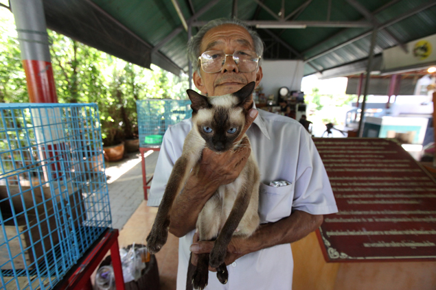 Preecha Pookabut has dedicated his life to working with Thai cats. He set up Baan Maew Thai in Samut Songkhram province in 2001 to conserve four of the five surviving breeds of Thai cats. More than one hundred cats are taken care of at the centre.