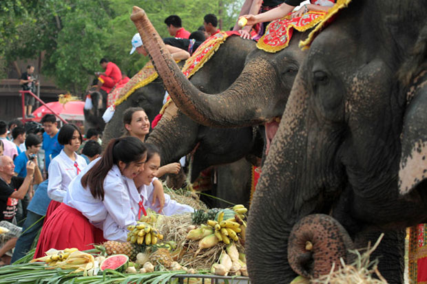 Students and tourists feed elephants as a Chinese buffet is organised for the jumbos at the elephant kraal in Ayutthaya on National Elephant Day, which falls on March 13 annually. (Photo by Chanat Katanyu)