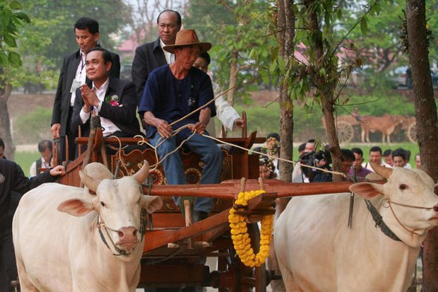 Prime Minister Prayut Chan-o-cha and security staff rode into Mae Rim district of Chiang Mai on an ox-drawn cart to preside over a so-called <i>Khuang Phrachao Lanna</i> - a project supported by the fortune teller Warin Buawiratlert and meant to showcase the life of people in old Lanna. (Photo by Thanarak Khunton)