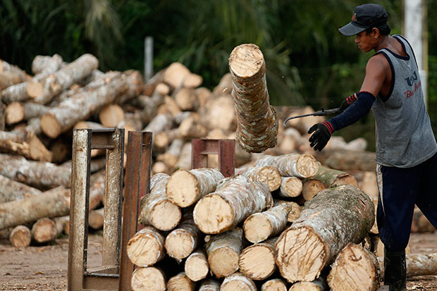 A worker sorts rubber tree logs into piles at Srithep Parawood Co in Wang Wiset district of Trang in this 2011 file photo. Benchmark rubber prices slid to a five-year low in October as trees planted in Asia over the past decade matured just as the Chinese economy slowed. But prices are recovering. (Bangkok Post photo)