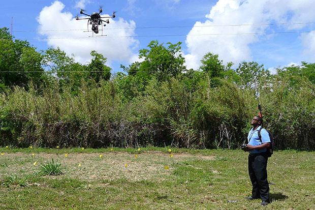 Ty Rozier flies a drove over an avocado grove. Researchers from Florida International University and the University of Florida are using grant money to find disease-ridden avocado trees with drones and fungus-sniffing dogs. (AP photo)