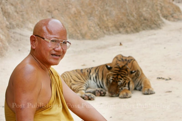 Phra Vissuthisaradhera, or Luangta Chan, sits with one of Wat Pa Luangta Bua Yanasampanno's many tigers in this file photo taken in 2008.