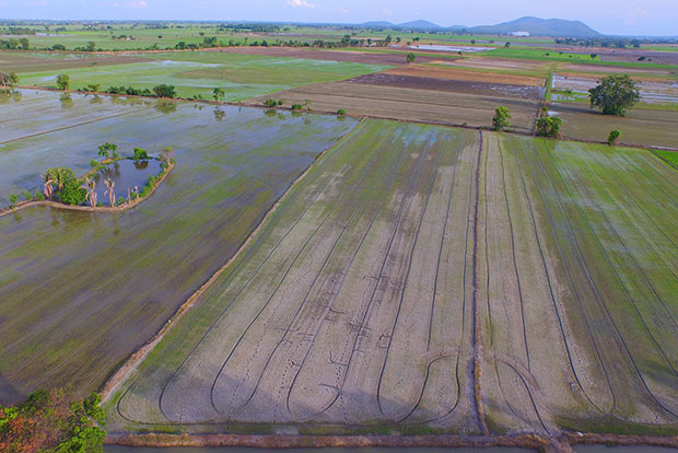 Farmers in Chai Nat province are preparing their fields to start the main rice crop, but they have been asked to delay planting due to the extreme water shortage. (Photo by Chudate Seehawong)