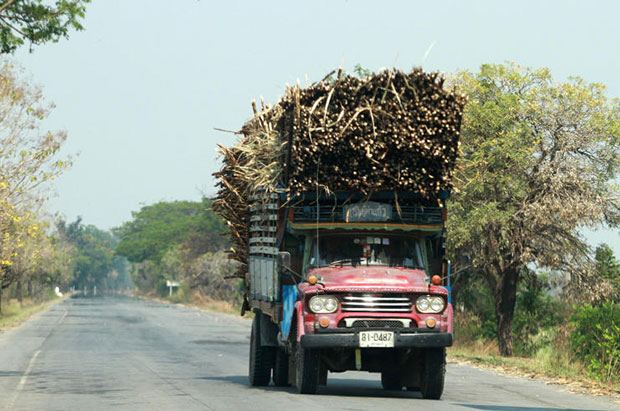 Trucks loaded with sugarcane are a common sight on rural roads in Thailand during the harvest season. (Bangkok Post file photo)
