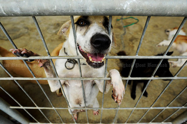 Around 5,500 stray and rescued dogs are being held in this 200-rai shelter in Uthai Thani's Thap Than district. (Bangkok Post file photo)