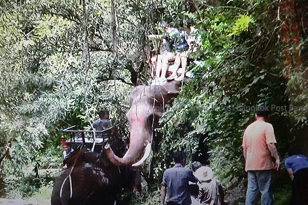 Three members of a Chinese family rescued and safe after a male elephant ran amok, gored his mahout to death and then tore off into the jungle with them still on his back, at Phutawan elephant camp (above) in Chiang Mai on Wednesday. (Photo by Cheewin Sattha)