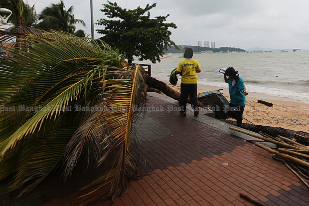 Palm trees were uprooted along Pattaya beach by tropical depression Vamco. (Photo by Pattarapong Chatpattarasill)