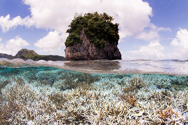 This photo provided by the XL Catlin Seaview Survey, taken in February, shows coral after bleaching in American Samoa, when the XL Catlin Seaview Survey responded to a NOAA coral bleaching alert. Devastating bleaching of colourful coral is spreading into a rare worldwide crisis, scientists announced, predicting it will likely get worse. (AP photo)