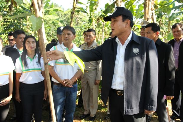 Gen Prayut looks at a Gros Michel banana tree in Mr Visut's farm during his visit to Surat Thani on Monday. (Photo by Supapong Chaolan)