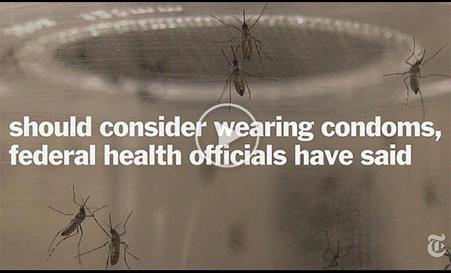 Understanding Zika