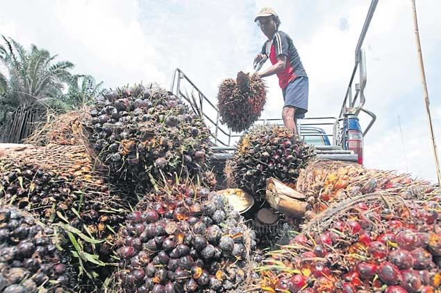 A worker unloads oil palm fruit from a truck at a processing plant in Lam Tap district of Krabi province.