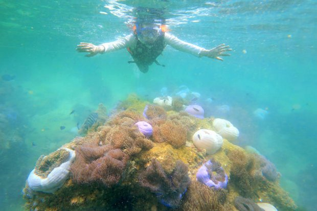 Beautiful coral just under the sea in the Gulf of Thailand has begun bleaching from hot weather and water. (Photo courtesy Tourist Authority of Thailand)