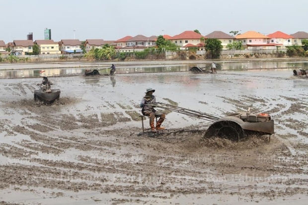 Optimistic farmers in Nonthaburi's Pak Kret district plough a field for their new rice crop after recent rains brought relief from the drought. The Meteorological Department recently declared the rainy season started on May 18. It is likely to last until mid-October. TAWATCHAI KEMGUMNERD