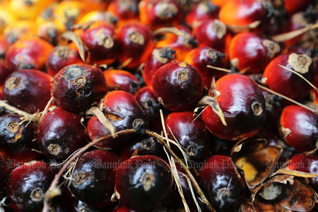 Palm nuts are used in the production of biofuel in many countries, including Thailand. (Bangkok Post file photo)