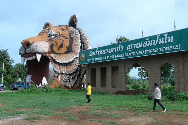 Officials survey the compound of the Tiger Temple in Kanchanaburi province on Tuesday before reclaiming about 80% of the entire area for redistribution to landless farmers. (Photo by Piyarach Chongcharoen)