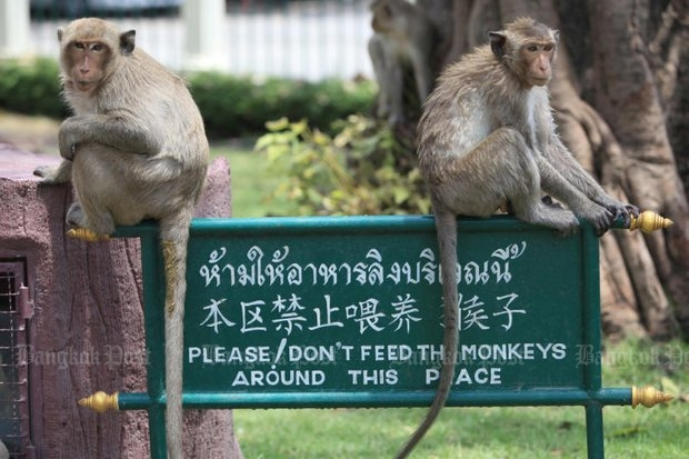 Long-tailed macaque can be naughty and destructive, and now have been accused of trying to sabotage the scheduled Aug 7 referendum lists. (Bangkok Post file photo)