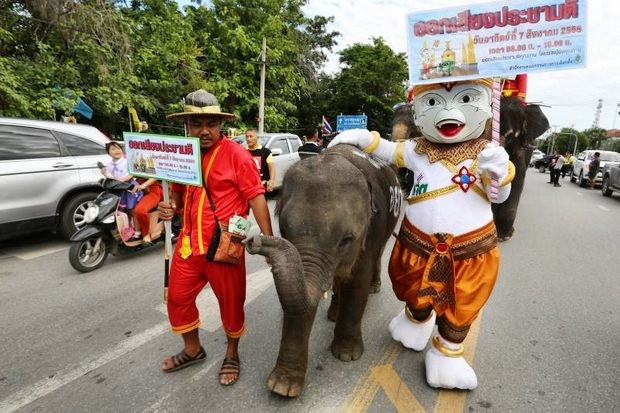 A mahout and the Election Commission's Hanuman mascot escort a small elephant parade through Ayutthaya town to urge turnout and a 'Yes' vote for the draft charter on Sunday. (EPA photo)