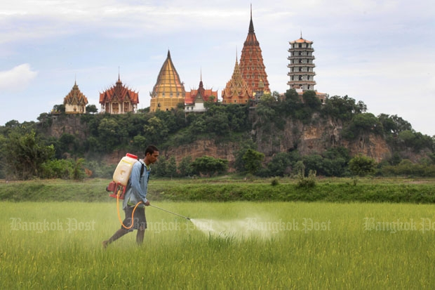 A farmer sprays weedkiller on his paddy field behind the Tiger Temple in Kanchanaburi province. Thailand clinched the sale of 100,000 tonnes of rice to the Philippines for US$42.5 million (about 1.5 billion baht) on Wednesday. (Photo by Thiti Wannamontha)