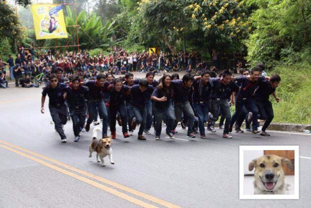 Shorty, homeless dog but unofficial mascot of Chiang Mai University, leading the charge up Doi Suthep.