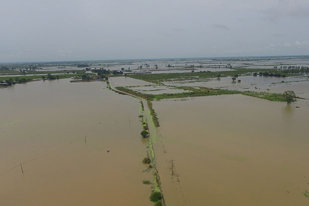 Around 4,500 rai of farmland near Mae Rahan village in Phitsanulok province was under one metre deep water on Tuesday after the old Yom River burst its banks. (Photo by Chinnawat Singha)