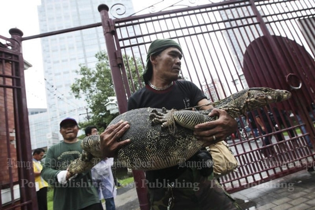 A Bangkok Metropolitan Administration environmental official carries a monitor lizard in a mission to move 40 of them from Lumpini Park to a wildlife sanctuary in Ratchaburi province on Sept 20, 2016. There are now around 400 of the reptiles in the Bangkok park. (Photos by Patipat Janthong)