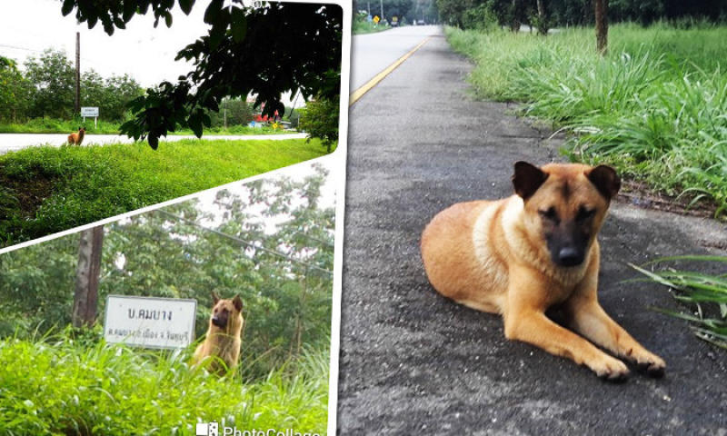 Loung waits for her owner. (Photos by Thamsathit Polkhaw)