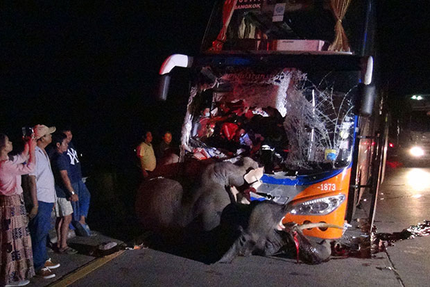 A male elephant, 8, is killed after being hit by an interprovincial bus in Hang Chat district, Lampang province, on late Friday night. The bus driver was badly hurt while other passengers were unhurt. (Photo by Aswin Wongkorkaew)