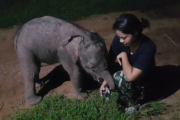 The injured elephant calf plays with a veterinarian at Khao Ang Rue Nai Wildlife Sanctuary in Tha Takiab district in Chachoengsao on Thursday. (Photo from Khao Ang Rue Nai Wildlife Sanctuary Facebook)