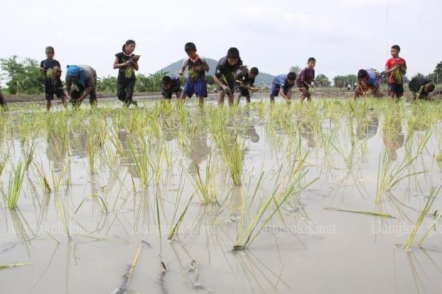 Students plant rice saplings at an organic rice plantation and demonstration centre in Chai Nat's Muang district. Unlike other rice farmers who engage in conventional methods, organic rice farmers can earn more income and enjoy good health.(Bangkok Post file photo)