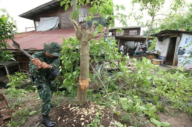 Crackdowns on kratom worthy of the war on drugs inhibit even basic research of plants, including kratom as a pain inhibitor. (Post Today file photo)