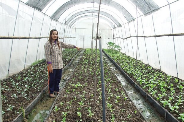 A farmer in Pathum Thani has moved her crops indoors. Thailand is the only country in Asean that complies with the international greenhouse gas reduction standards. (File photo by Anucha Charoenpo)
