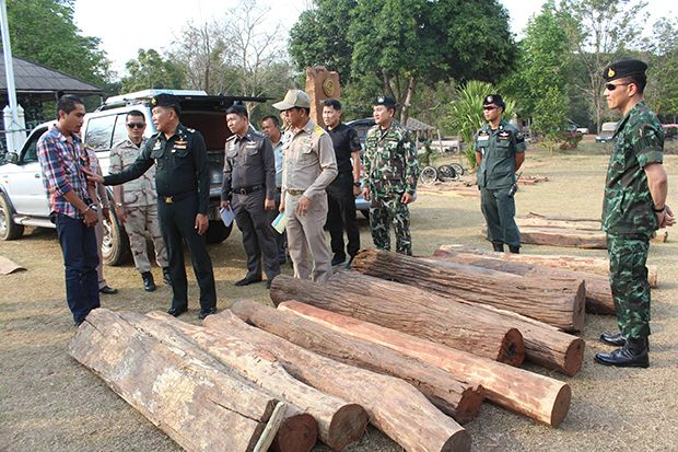 Officials show the suspect and phayaung logs worth around 1 million baht seized from the pickup truck he was driving in Khon Buri district early on Wednesday. (Photo by Prasit Tangprasert)