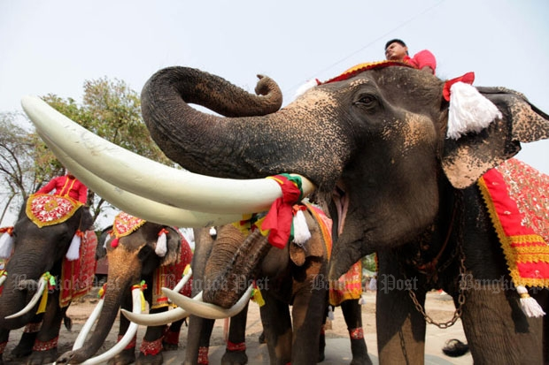 Elephants and mahouts attend an event to mark the National Elephant Day at the Ayutthaya Elephant Palace in Ayutthaya province in 2015. Their owner Laithongrien Meepan announces that 100 elephants will march with their keepers to Bangkok for a protest rally on the upcoming National Elephant Day on March 13. (Photo by Chanat Katanyu)