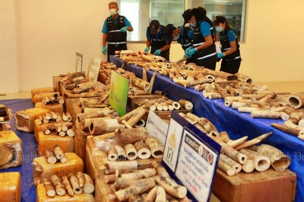 Police and customs unpack 422 pieces of ivory from Malawi weighing 330kg, after the arrest of the alleged smuggler, of a Gambian man identified as Sainey Jagne. (Photo and video by Somchai Poomlard)