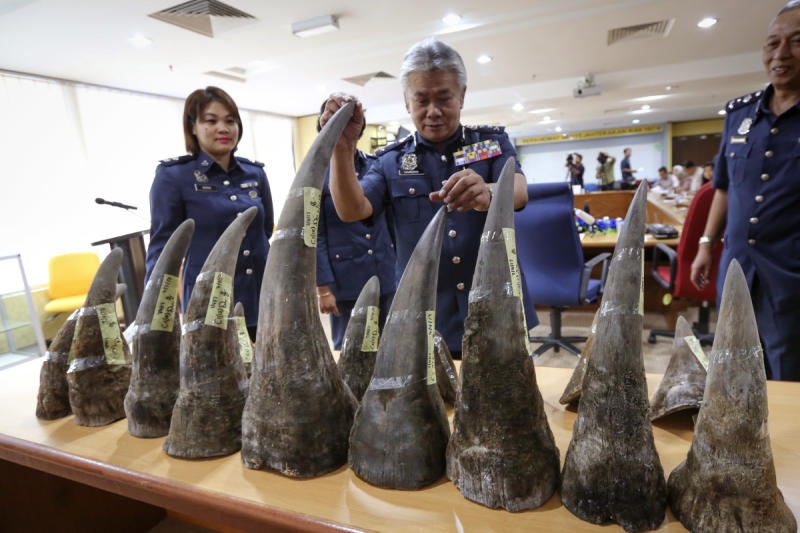 Kuala Lumpur International Airport customs director Hamzah Sundang (centre) inspects the rhino horns that were seized at the airport during a press conference in Sepang on Monday. (AP photo)