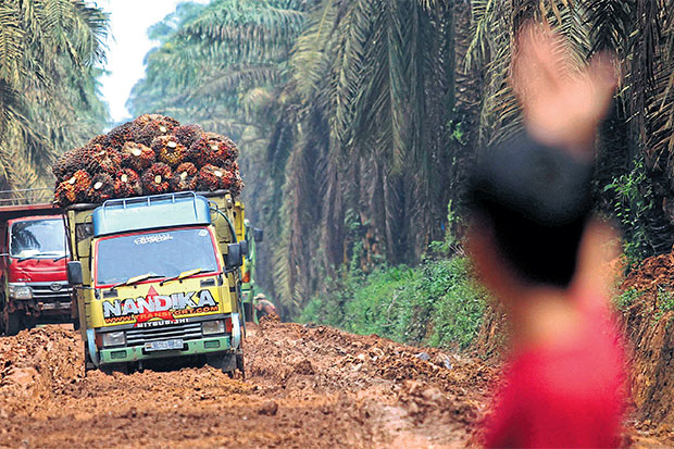 A man directs trucks carrying oil palm fruit along a damaged road in Ogan Komering Ilir in South Sumatra. (Reuters photo)