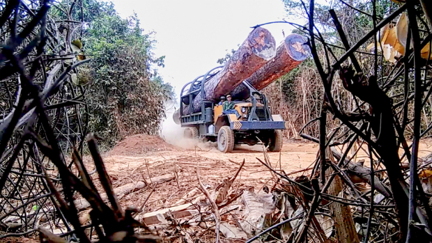 A truck carries giant logs felled illegally in a Cambodian national park, according to the Environmental Investigation Agency. (EIA photo)