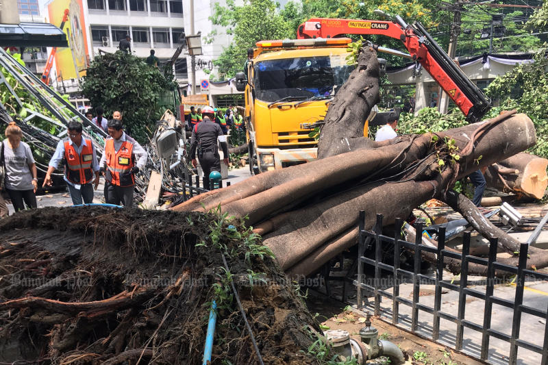 A tree lies across a fence in Soi Chidlom near Central Chidlom department store in Bangkok, where power poles uprooted when the tree fell hit three passing motorcycles on Saturday morning. One woman riding one of the bikes was killed. (Photo by Sarot Meksophawannakul)