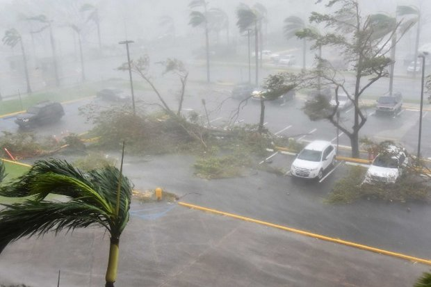 Trees are toppled outside the Roberto Clemente Coliseum in San Juan,  Puerto Rico. (Photo via AP)