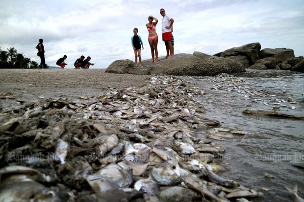 A foreign family checks out the pile of dead fish washed onto the beach where they had planned to spend the day at Hua Hin on Tuesday. (Photo by Chaiwat Satyaem)
