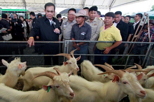 Prime Minister Prayut Chan-o-cha began his two-day mobile cabinet meeting in the South at a Pattani school and its goat farmers. (Reuters photo)