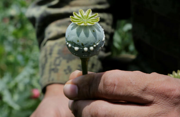 A soldier holds a lanced poppy bulb to show how to extract the sap, which is used to make opium, during a military operation to destroy a poppy field in the municipality of Coyuca de Catalan, Mexico April 18, 2017. (Reuters file photo)
