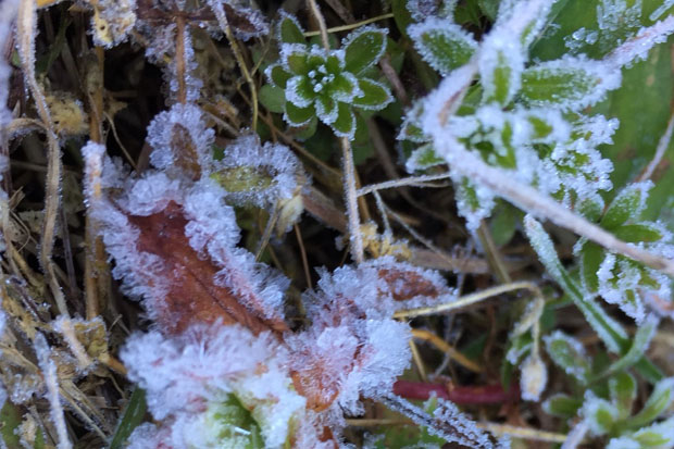 Frost, locally called 'mae khaning', cover plants on Doi Inthanon in Chiang Mai where the temperature plunged to -2C on Wednesday. (Photo by Doi Inthanon National Park)