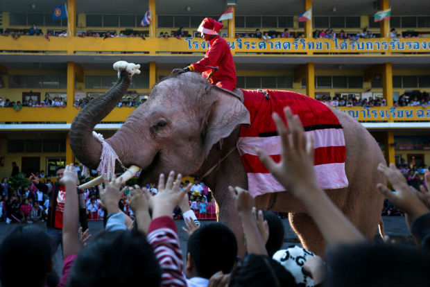 A trained elephant dressed in a Santa Claus costume distributes a doll to students during Christmas celebrations at Jirasart school in Ayutthaya on Friday. In South Africa, bees are being used to prevent wild elephants from trampling trees. (Reuters photo)
