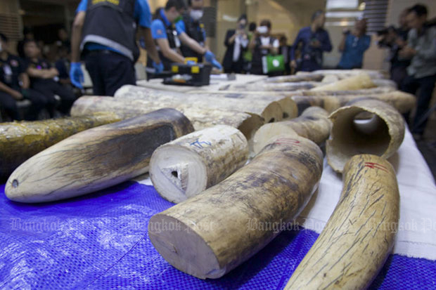 The ivory tusks seized at Suvarnabhumi airport on Dec 20 shown at a press briefing at the Customs Department on Friday. (Photo by Apichit Jinakul)