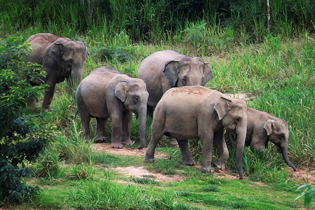 Elephants invading farms and endangering livestock or crops are a long-standing problem. At a famous elephant sanctuary in Kui Buri National Park, officials use beehives to drive jumbos away. Chaiwat Satyam